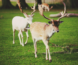 animals, green, and nature image