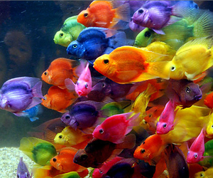 fish, colors, and colorful image