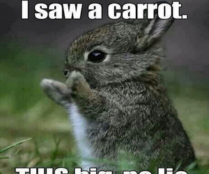 carrot, grey, and meme image