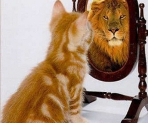 cat, lion, and mirror image