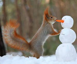squirrel, snowman, and snow image