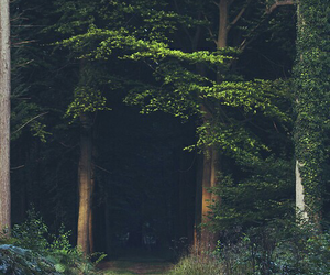 green, wood, and nature image