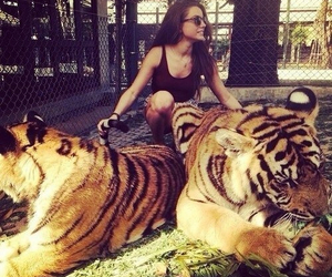 girl, tiger, and tigers image