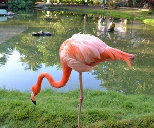 animals, hotel, and Dominican Republic image
