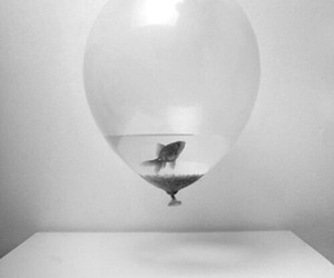 baloon, black and white, and fish image
