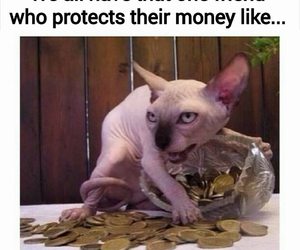 funny, money, and cat image