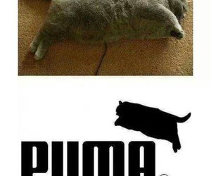 cat, funny, and fat image