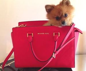 dog and Michael Kors image