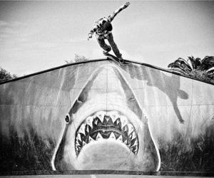 skate, shark, and boy image