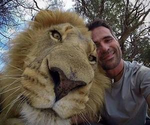 lion, selfie, and animal image