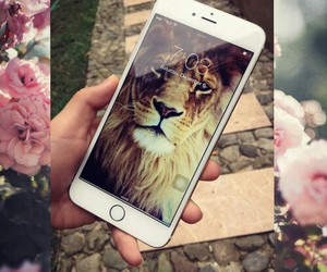 apple and iphone 6 plus image