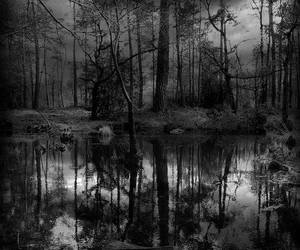 dark, forest, and insane image