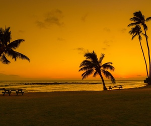 palms, beach, and ocean image
