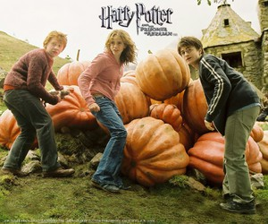 hermione, granger, and harry image