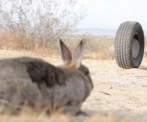 rabbit, rubber, and quentin dupieux image