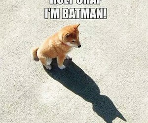 batman, dog, and funny image