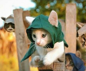 assassins, cats, and video image