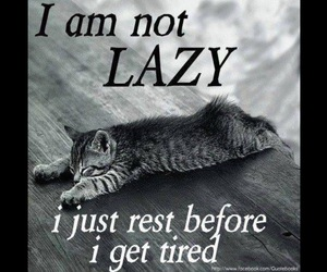 cat, Lazy, and tired image