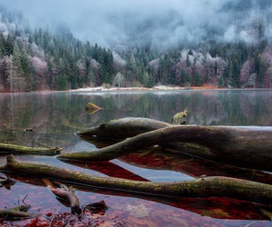 colors, forest, and water image