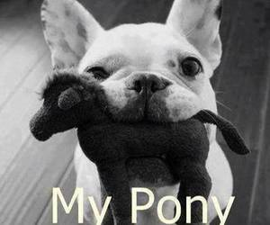 dog, pony, and cute image