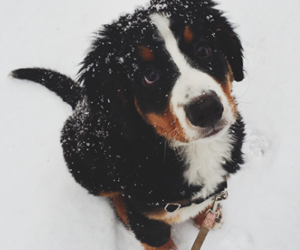 cold, winter, and dog image