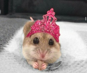 animals, crown, and Awe image