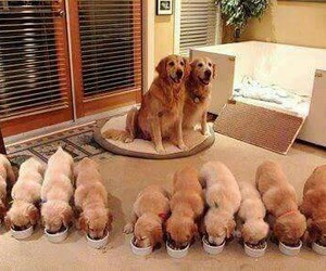 dogs family image