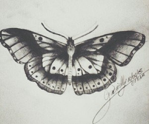 b&w, butterfly, and draw image