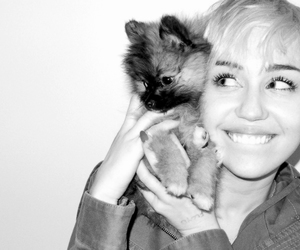 miley, beautiful, and miley cyrus image