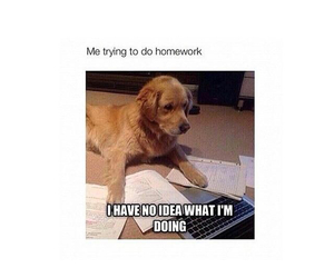 homework, funny, and dog image