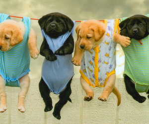 babies and puppies image