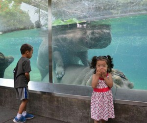 funny, animals, and child image