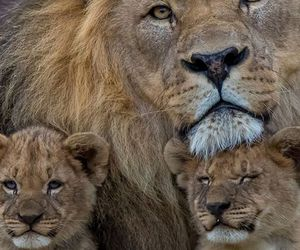 animals, dad, and travel image