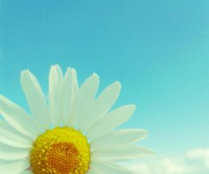 blue, clouds, and daisy image