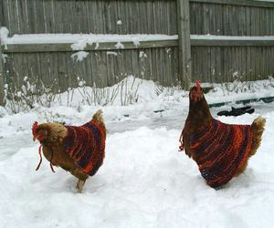 Chicken and snow image