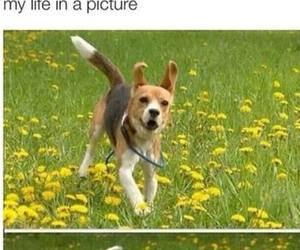 dog, life, and me image