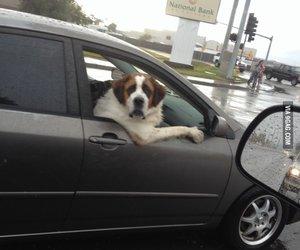 animal, car, and funny image