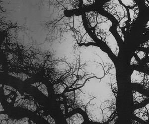 tree, dark, and forest image