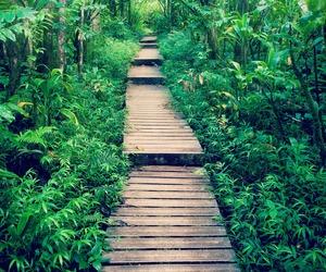 amazing, bridge, and forest image