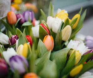 flowers, tulips, and beautiful image