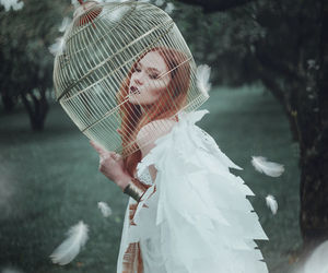 white, bird, and photography image