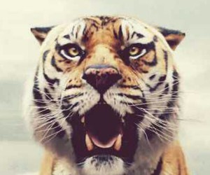 tiger, Life of Pi, and movie image