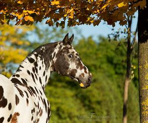 horse, autumn, and leaves image
