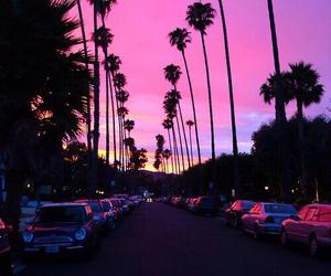 cali, la, and palmtree image
