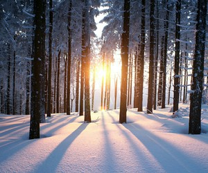 winter, snow, and sun image