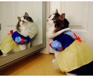 cat, cute, and disney image