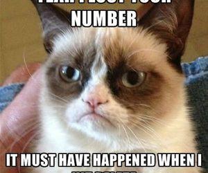 grumpy cat, funny, and delete image