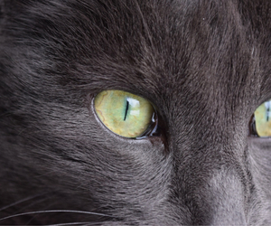 cat eye grey cute image