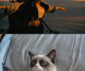funny, titanic, and cat image