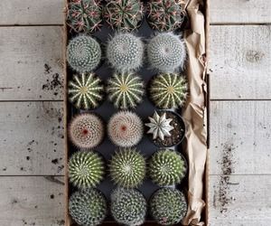 cactus, grunge, and tumblr image